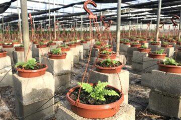 vivero-de-plantas-ornamentales