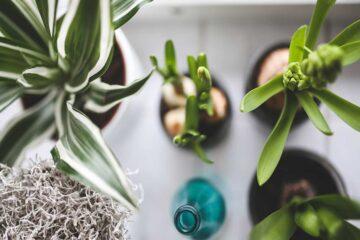 Todo-lo-necesario-para-cuidar-tus-plantas-de-interior