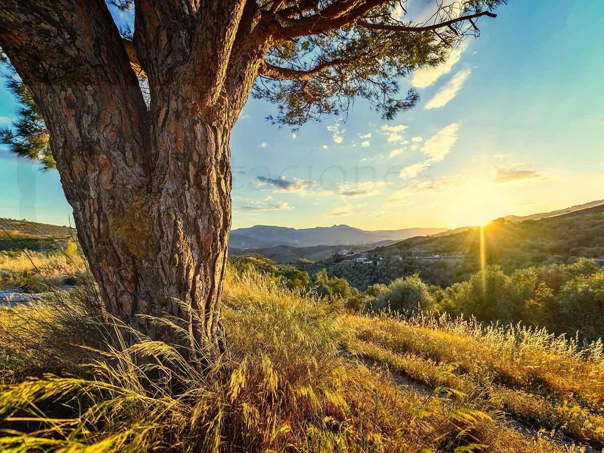 plantas-en-peligro-de-extinción-en-Andalucía