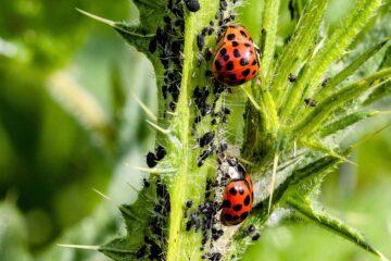 Plagas y tratamientos para plantas de interior