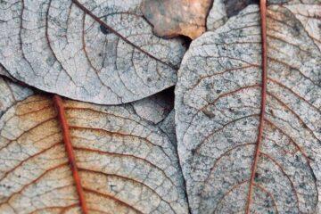 enfermedades comunes en las plantas de interior