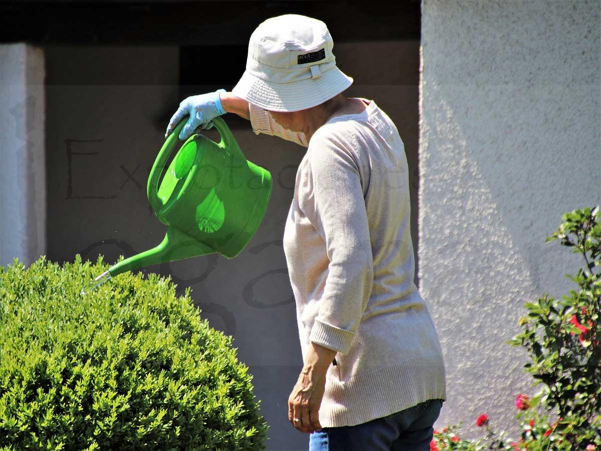 El cuidado de las plantas en verano