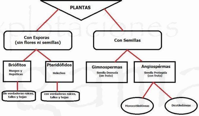 clasificacion-de-las-plantas