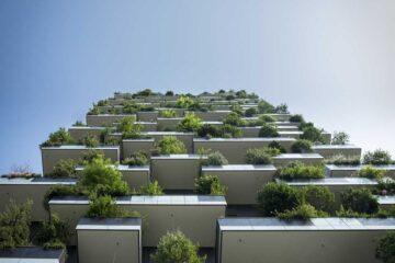 mejores-plantas-para-el-balcón