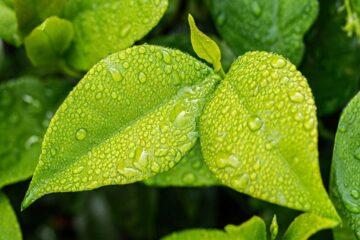 Beneficios de la lluvia para las plantas ornamentales
