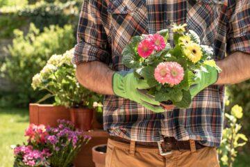 Consejos-de-jardinería-para-principiantes