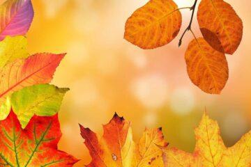 Consejos-para-cuidar-tus-plantas-en-otoño