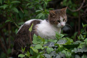 plantas-seguras-para-gatos