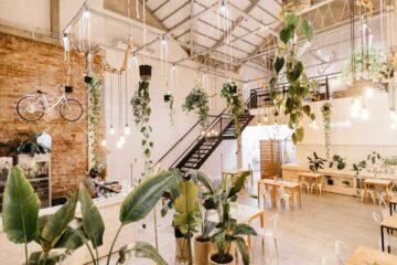 Ideas originales para decorar con plantas