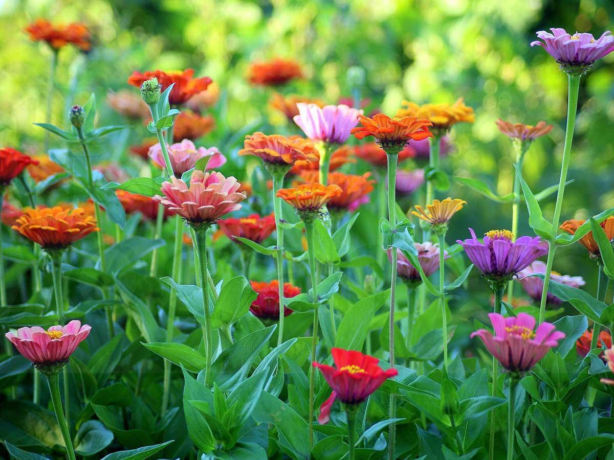 como-decorar-un-jardín-pequeño