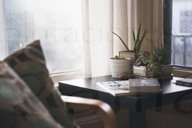 El mejor lugar para tus plantas de interior