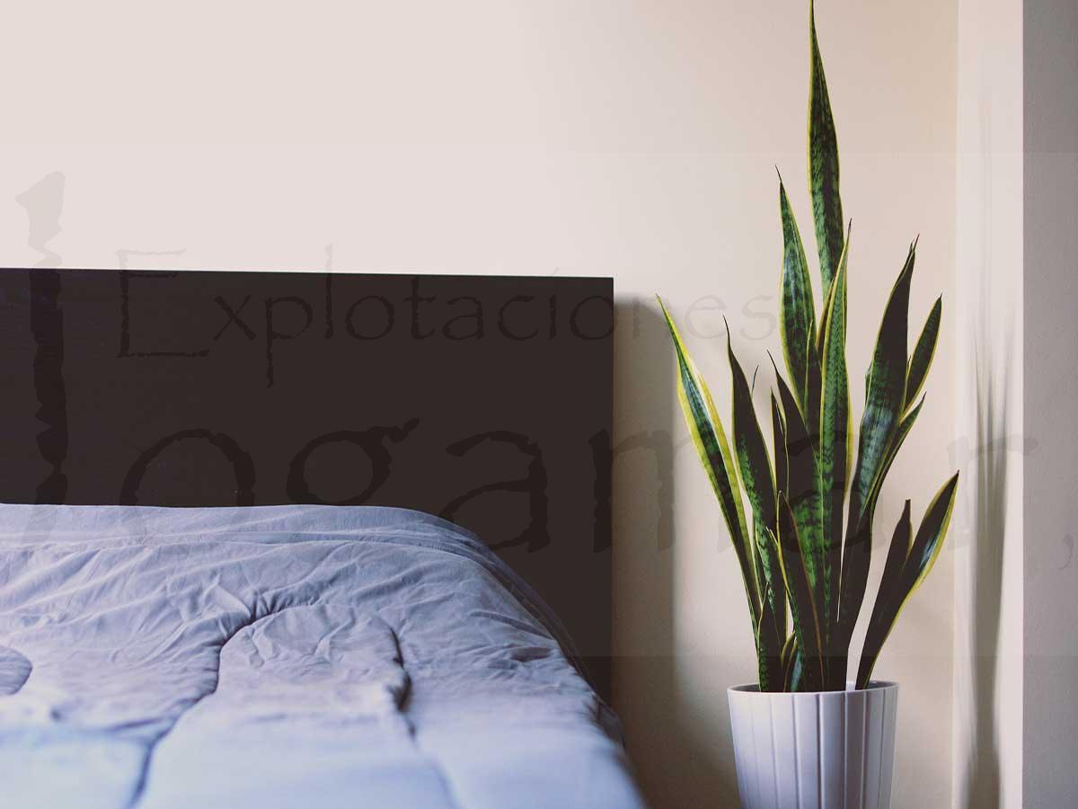 Plantas-ideales-para-pisos