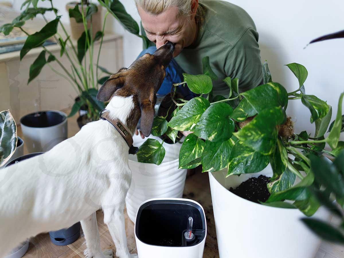 plantas-de-interior-y-mascotas