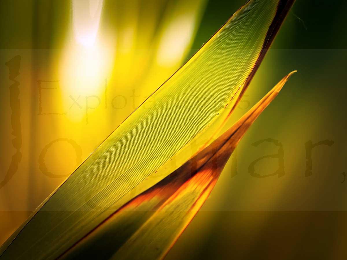 protege-a-tus-plantas-de-las-olas-de-calor